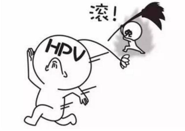 有关研究发现,80%的女性一生中都可能感染hpv,感染高峰在