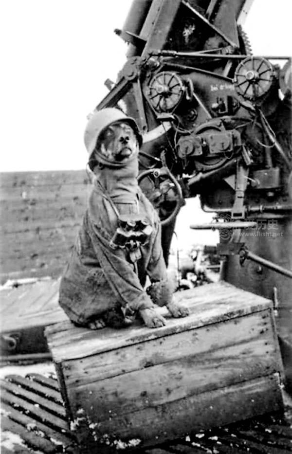 德国曾计划组建会说人话的狗狗部队希特勒是坚定支持者