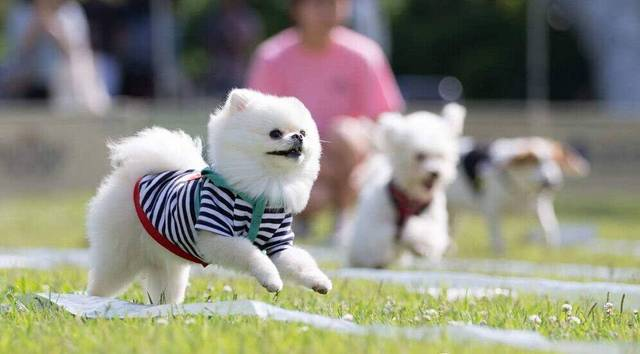 狗狗一天拉几次大便算正常?狗狗便秘拉不出来