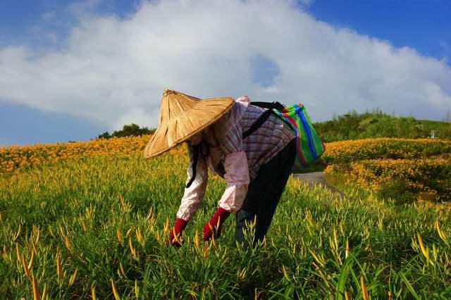 种地壁纸_农村人真的就该一辈子在家种地吗?没有更好地选择吗