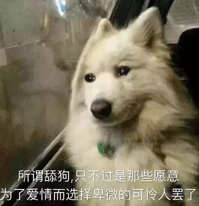 你怕是对舔狗有什么误会