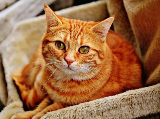 十只橘猫九只胖,还有一只特别胖!