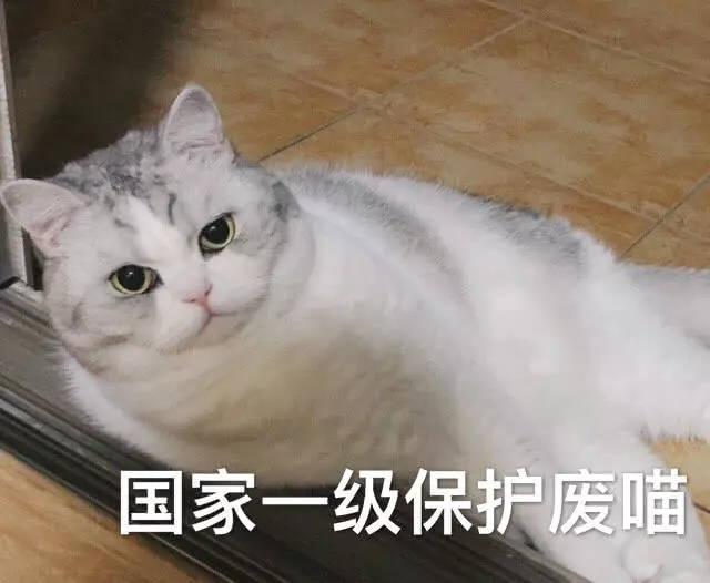 猫咪表情包:我这一辈子到底是个什么命?