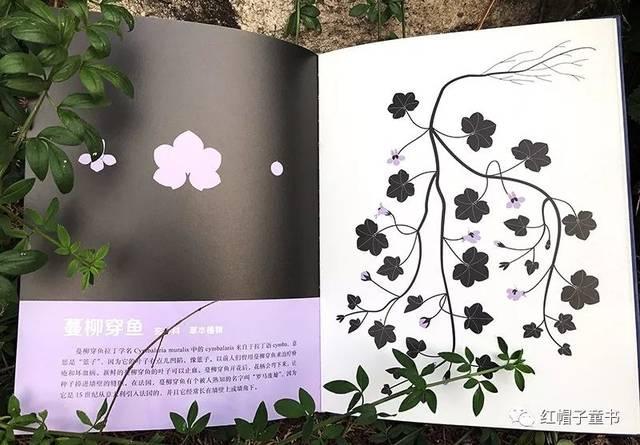 悬铃木叶,枫树翅果等内容均出自书中),让《我身边的植物朋友》呈现