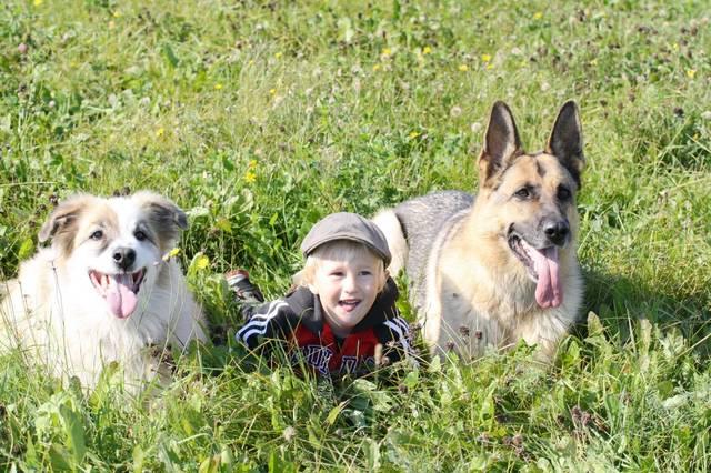 欧美美女让狗操b视频_原创世界上最爱狗的国家 街上没有流浪狗 美女钟爱大型犬