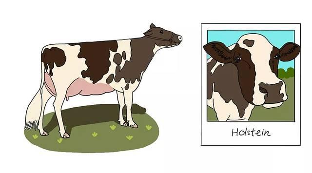 大奶牛bt_全球6 大奶牛大pk,你喝的是哪一种?
