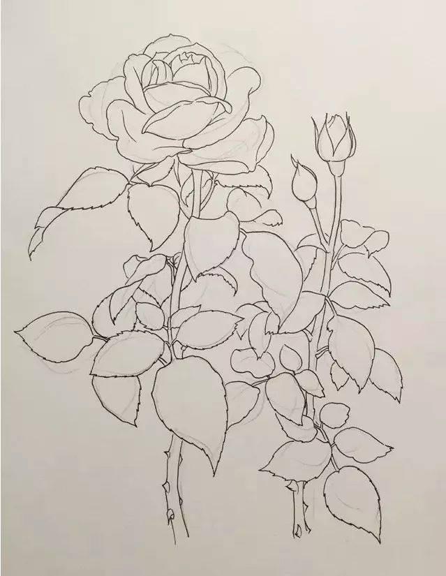 【手绘微课堂】唯美针管笔花卉线描3