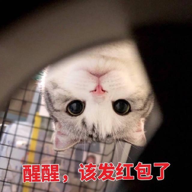 猫咪拜年表情包:恭喜发财,红包拿来