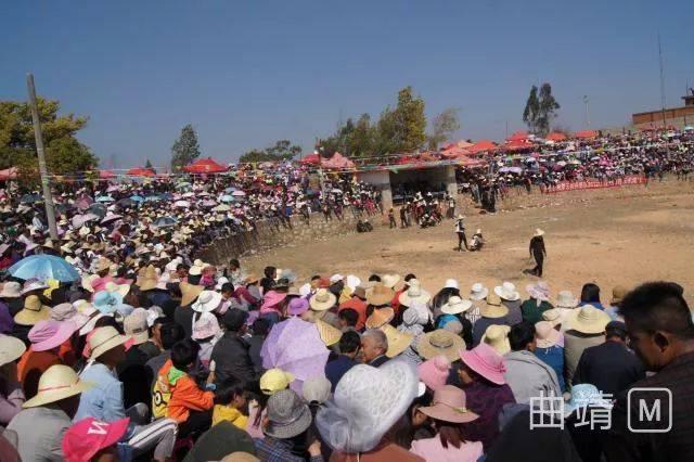这几天大莫古镇 上演春节传统斗牛比天天斗牛赛