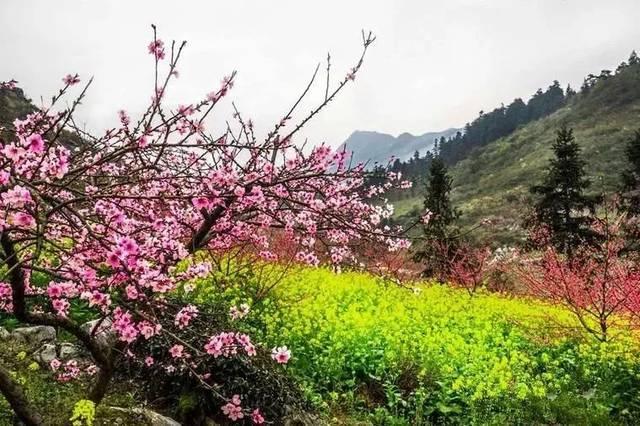 桂林的春天已经悄悄把摄影师逼疯了 但90%的人却去错了!