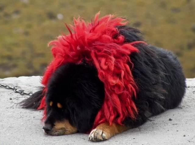 世界十大护卫犬品种排名!个个都是狠角色