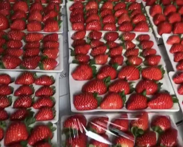 导航:沙岚垭(巴南区) 草莓价格:288元一箱包邮(一箱有3盒) 联系电话