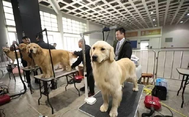 第七届中国(廊坊)宠物生活博览会暨2019CKU全犬种冠军展在廊举办