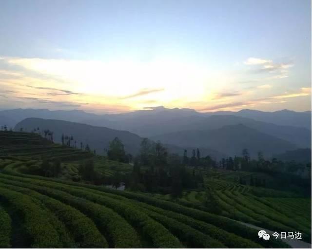 马边春茶开采了峨眉雪芽在荣丁的茶厂也开始动起来咯