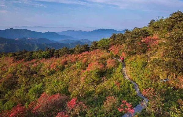 石头铺成的小道蜿蜒曲折,清澈的溪流从树边穿过,桃林藏在其间,与自然图片