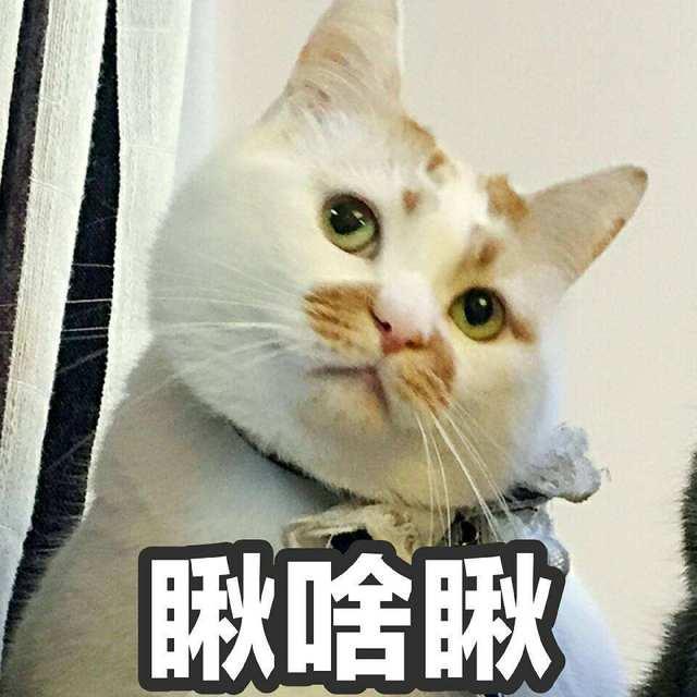 """神吐槽:擼貓、吃火鍋、見網友……多少年輕人活得沒有這些老奶奶""""時尚""""?"""