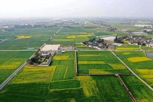 首届中国·罗江油菜花节开幕了,游客可以乘坐热气球或者体验一下直升