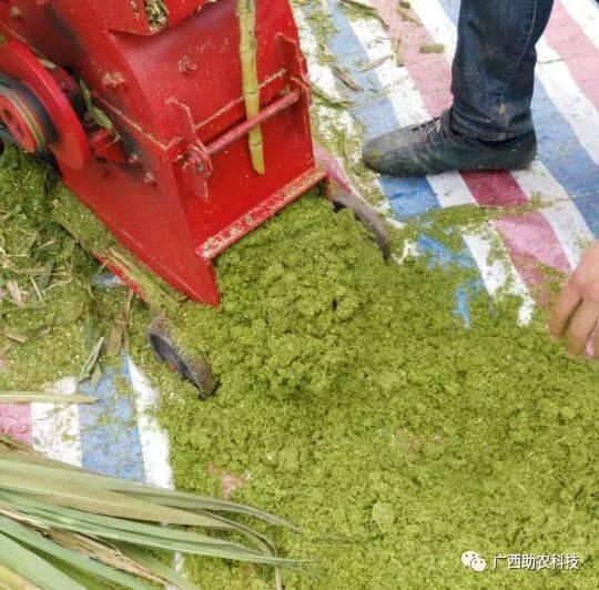 投资万元相当于投资约20万元成为加工牧草秸秆发酵饲料自用还可以外卖。青绿牧草秸秆多功能超细粉碎机养殖