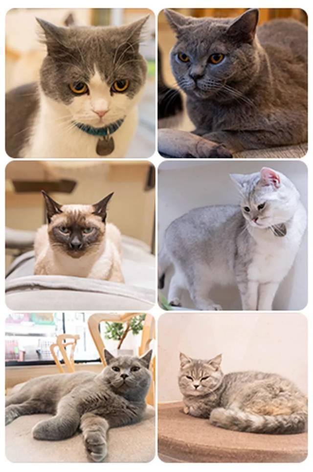 手机撸?_魔都这家猫咪咖啡馆,40多只猫咪任你撸!_手机搜狐网
