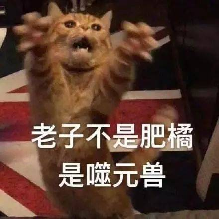 92撸电影网_于是一部超级英雄电影变成了大型撸猫电影!