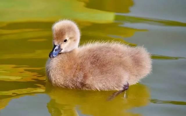 鸟宝宝们教你如何变美~