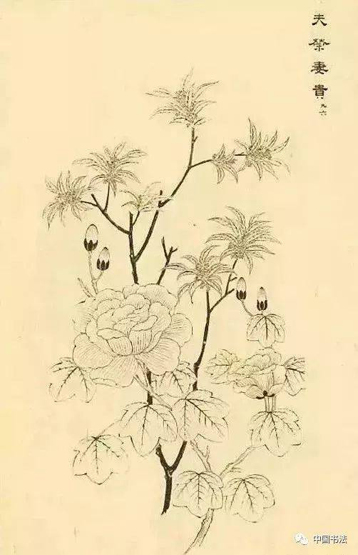 金桂花树简笔画