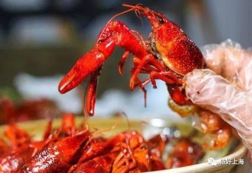 有没有一种小龙虾是蓬松的