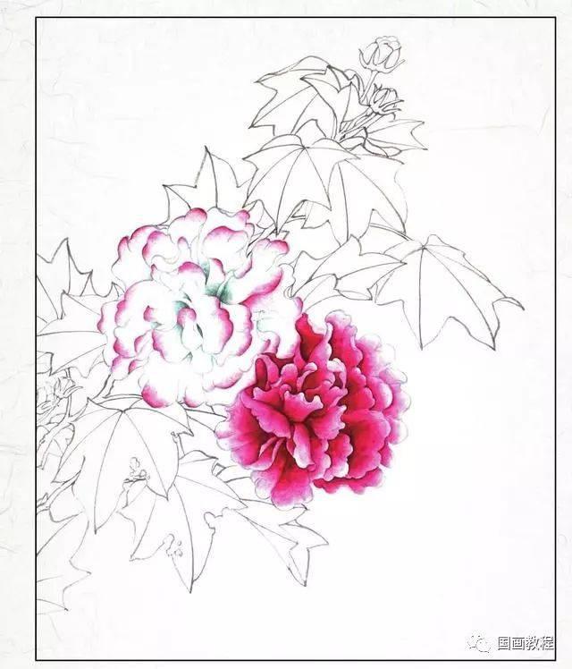 【国画教程】两种花卉工笔画步骤图解,简单易学!图片