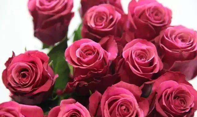 diy手工制作玫瑰