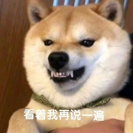 沙雕柴犬的表情包|野心不大,你和天下