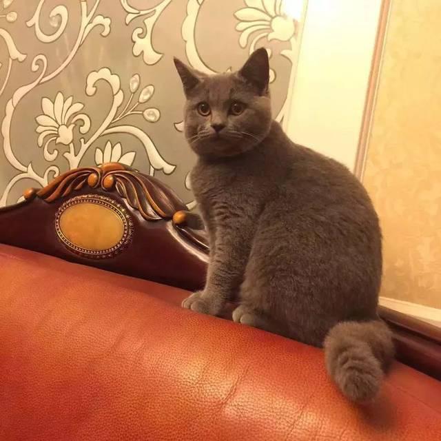 哥哥撸bt种子下载_大王  这是橘熊哥哥的第一只猫,也是它的最爱,大王是宅·下即猫性格