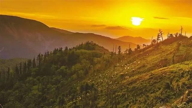 保护秦岭   野生动物的天堂!_手机搜狐网图片