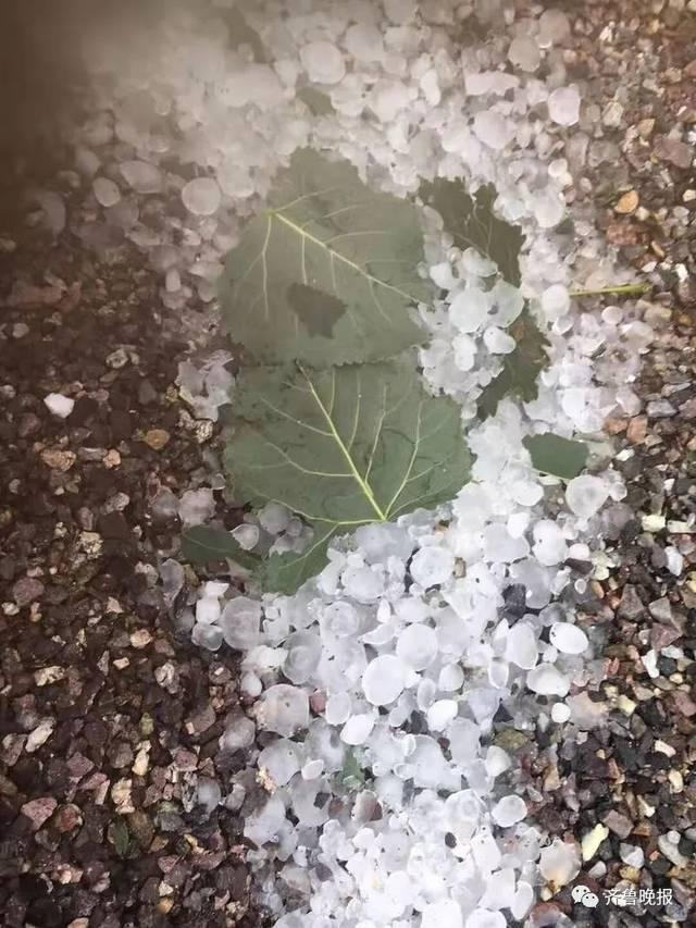 潍坊日照多地突降冰雹,大如鸽子蛋!树木庄稼惨遭袭击...