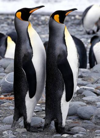 企鹅在北极生存?北极熊在南极活下去?臭点滴咬了打蚊子可以吗图片