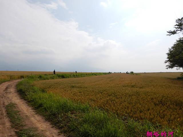 洋河中国梦蓝美稣
