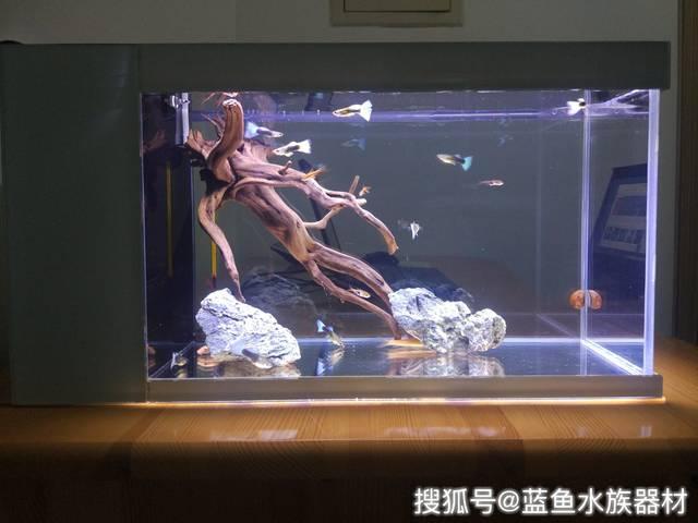 鱼缸潜水循环水泵选择方法_手机搜狐网图片