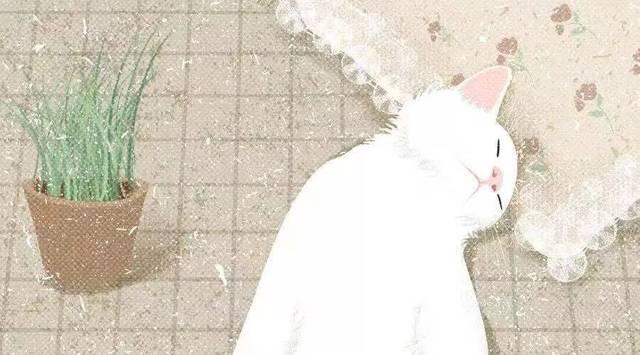 谈恋爱前不如先养猫
