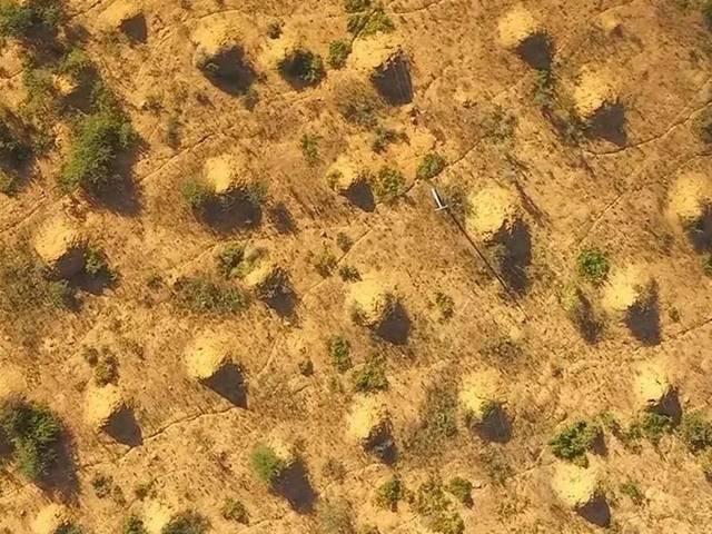 """原创卫星地图都可见的""""白蚁文明"""",2亿座蚁丘面积与英国相当,历史比图片"""