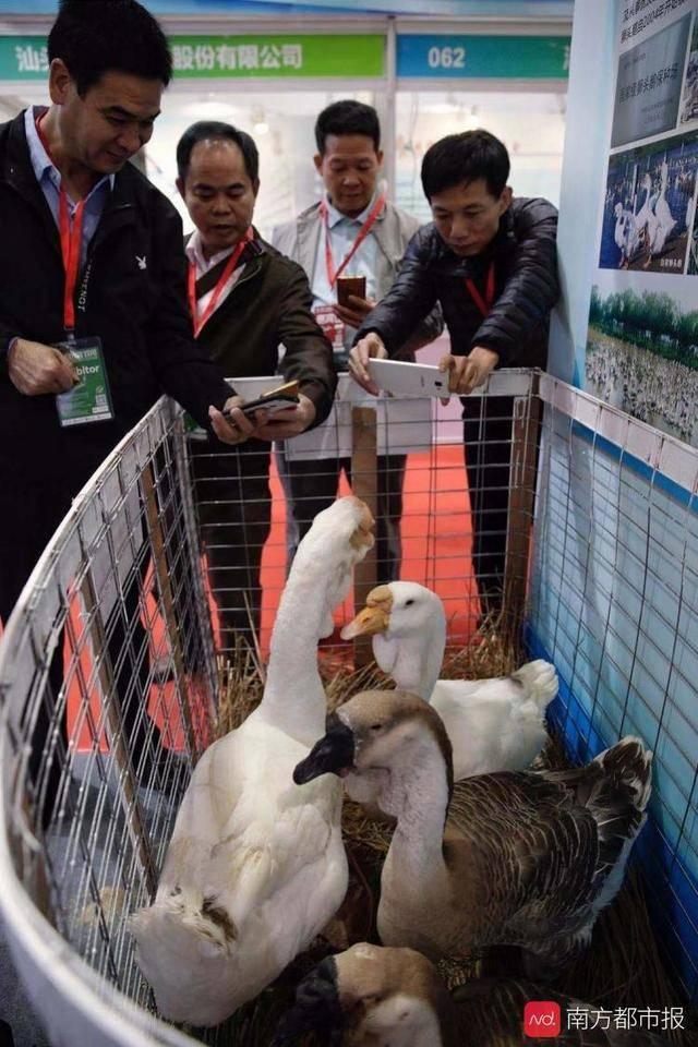 这届广东农博会厉害了!香港农产