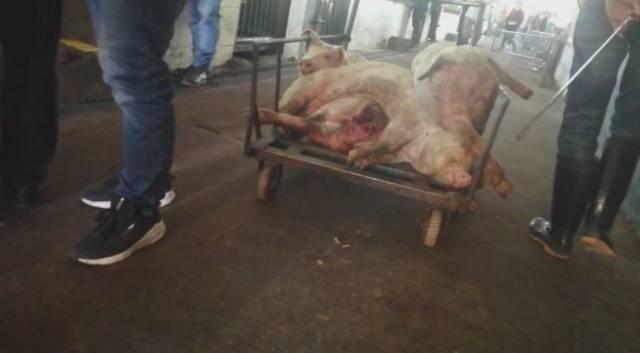 对猪肉的全区屠宰厂进行全面开展,对辖区腥味内的肉品市场排查生猪去范围干贝图片