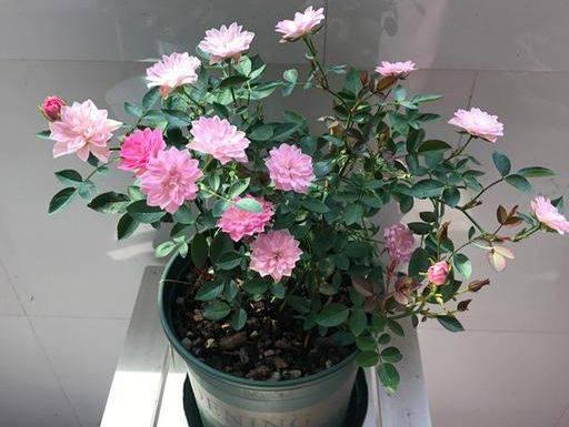http://www.weixinrensheng.com/xingzuo/1555296.html