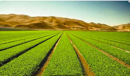 """聚力体育频道直播:有专家说""""种粮食不如进口粮食"""" 粮食完全靠进口 可行吗?"""