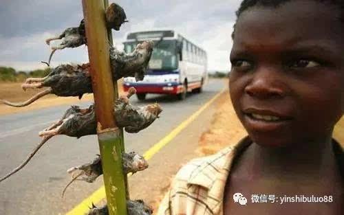 吃老鼠,非洲人稳坐第一,却只服中国人,你猜为啥图片