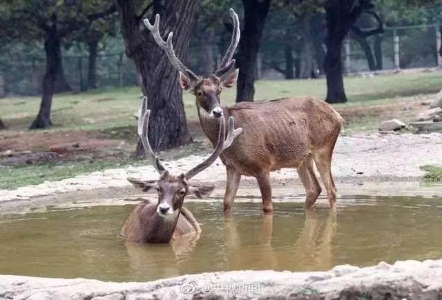 西安秦岭野生动物园动物这样消暑:喝绿豆汤吃西瓜