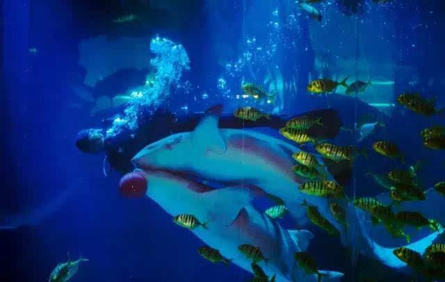 青岛海底世界,魔幻海洋快乐畅享