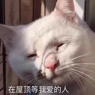 魅力妹知道你们看了这些丑猫快笑过去了, 已经无心公正评比.