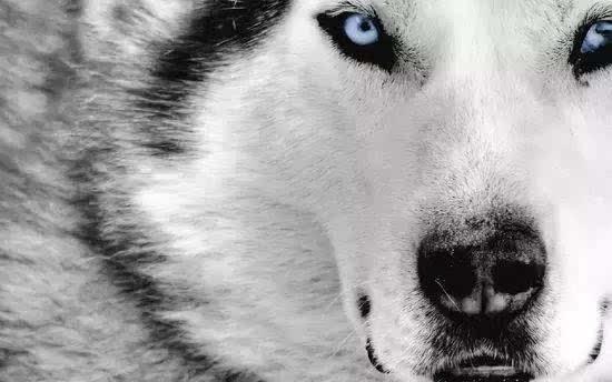 自律和狼性成就美满人生