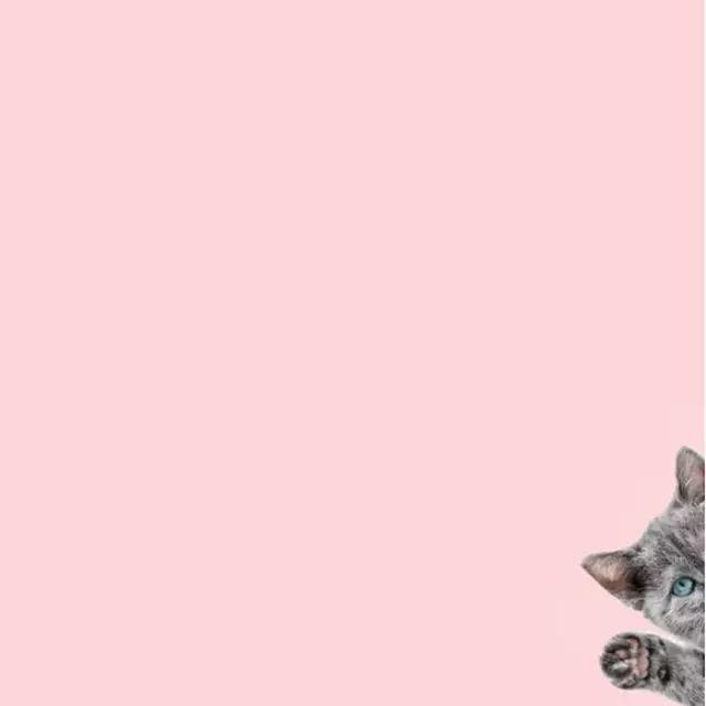 做成可爱有趣的手机壁纸 尤其是猫咪 diloklak的图 简直是云养猫小