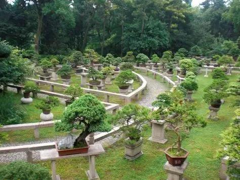 盆景园景观规划设计初探