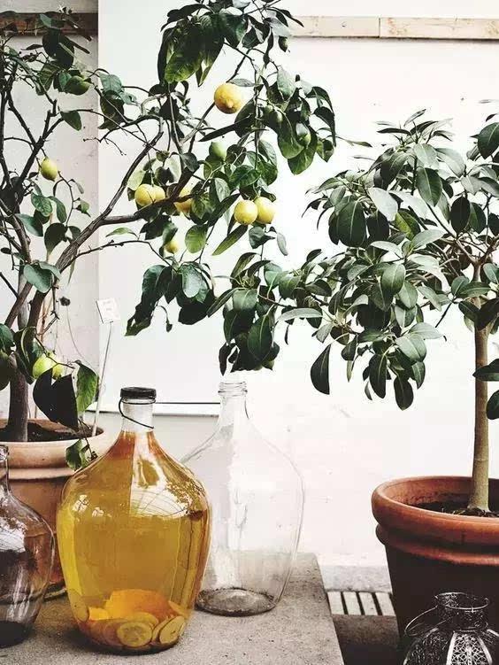 壁纸 花 盆景 盆栽 植物 桌面 564_751 竖版 竖屏 手机